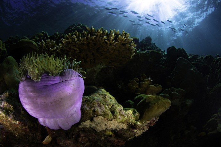 Close-up Coral
