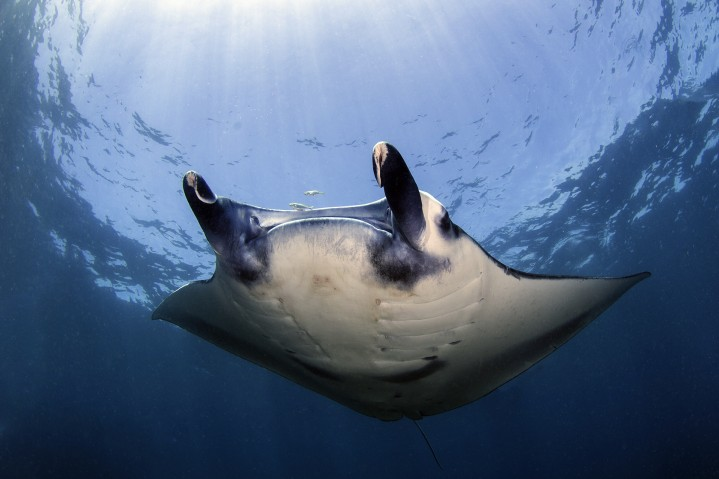 Manta Encounter