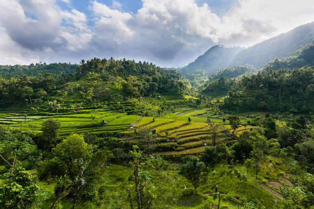 Amazing Bali Rice Terraces