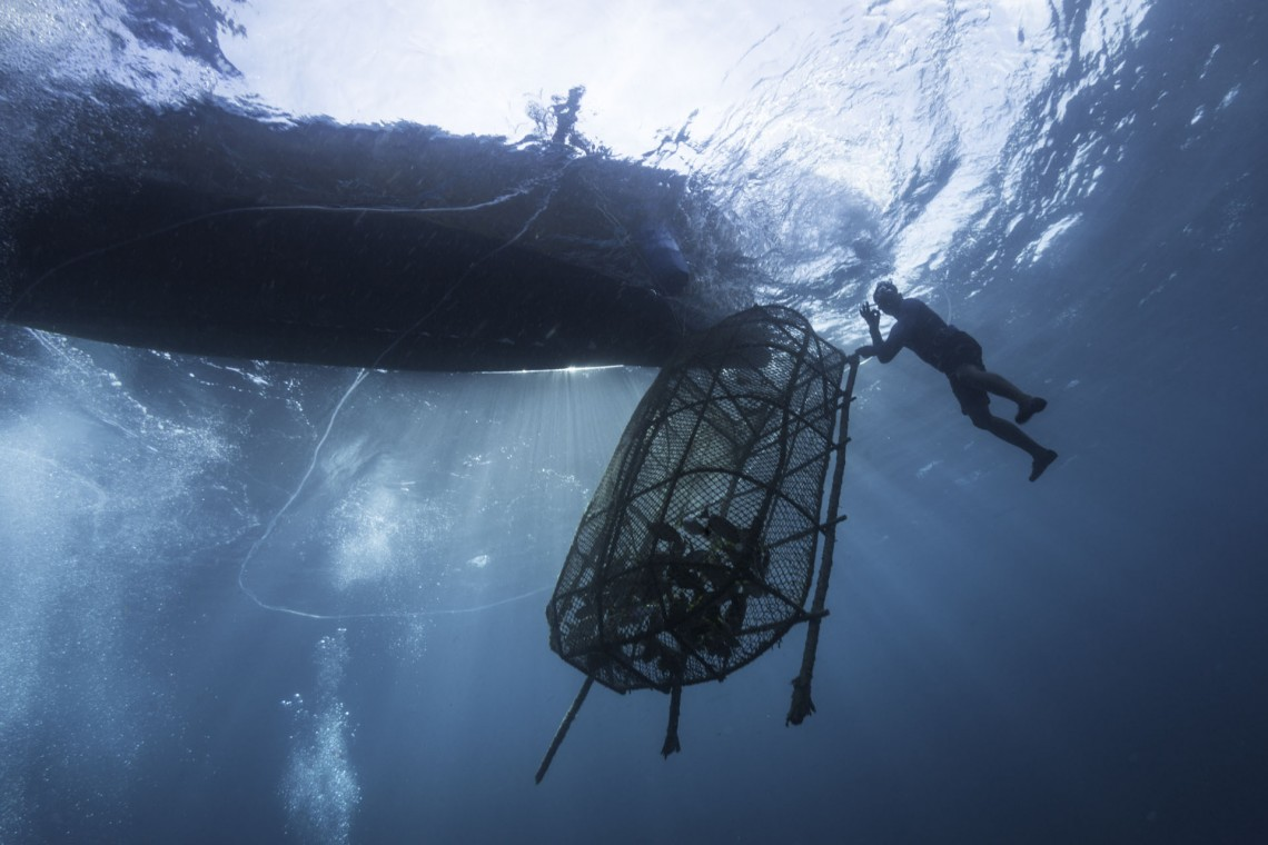 Diver Taking Out The Fish Trap